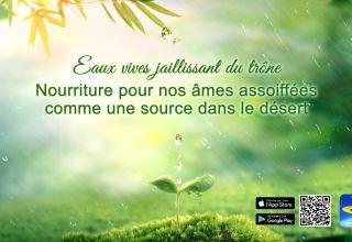Dieu est la source de la vie humaine